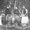 Apple pickers in the late 1800's